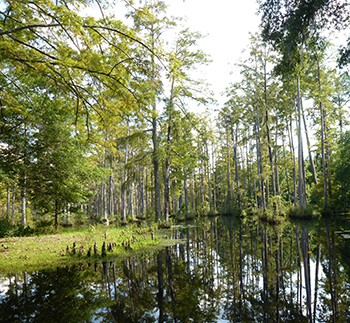 image of swamp landscape